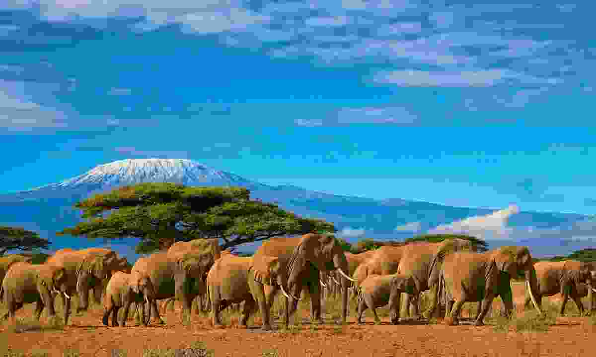 Help conserve wildlife by paying them a visit: Look for elephants in Africa (Dreamstime)