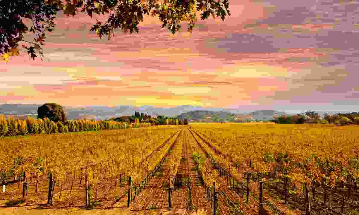 Californian vineyards in autumn (Dreamstime)