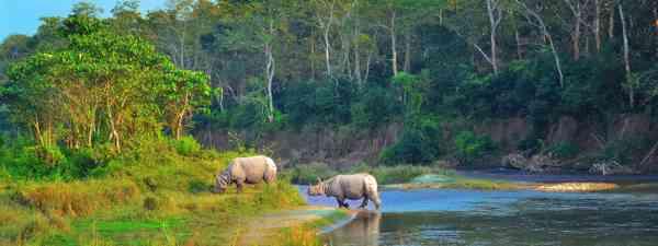Rhinos in Chitwan (Dreamstime)