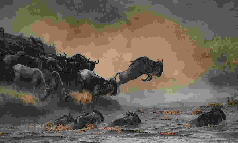 Wildebeest during the Great Migration (Shutterstock)
