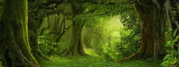 Sunlight coming through trees (Shutterstock)