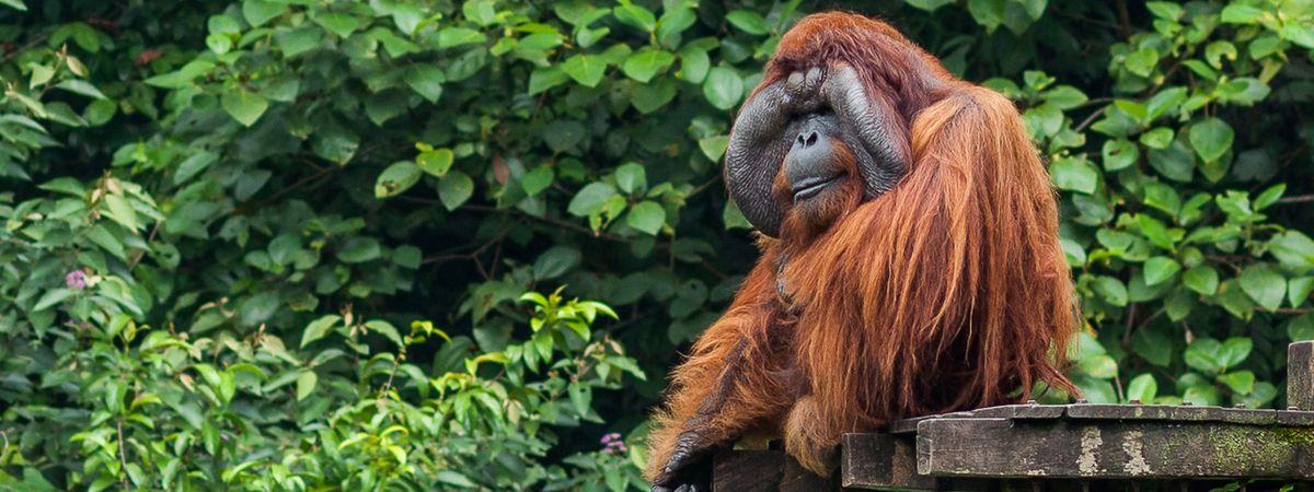 8 of the best wildlife conservation volunteering trips