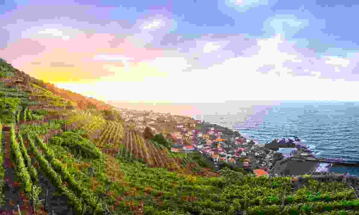 The rolling vineyards of Madeira (Shutterstock)