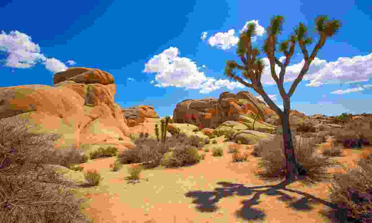 Joshua Tree National Park, Mojave Desert (Dreamstime)