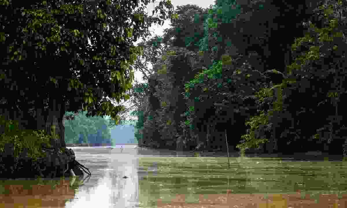 Kinabatangan River (Dreamstime)