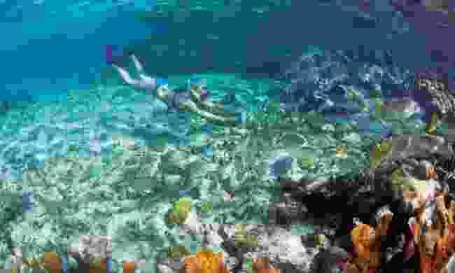 Snorkelling in Belize (iStock)