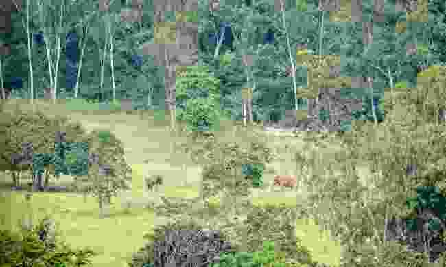 Wild Elephants wander through the Kui Buri National Park, Thailand (Julia Wainwright)