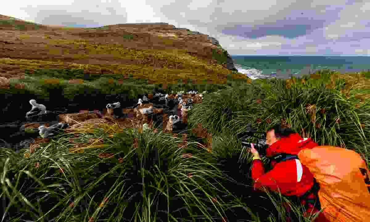 Enjoy very close range wildlife photography (Nicky Souness)