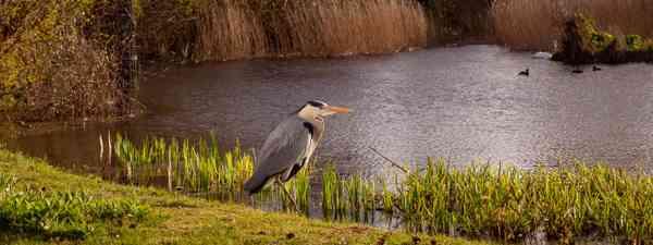 Unexpected wildlife hotspots in the UK (Shutterstock)