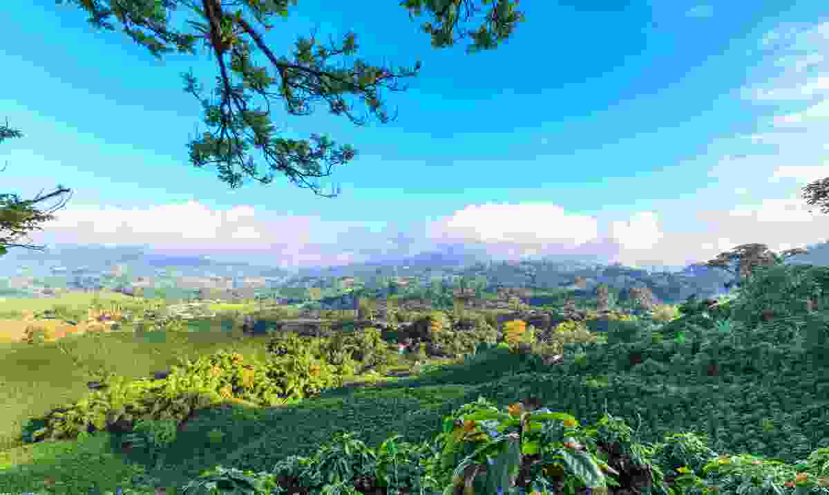 A stunning view over a coffee plantation (Shutterstock)