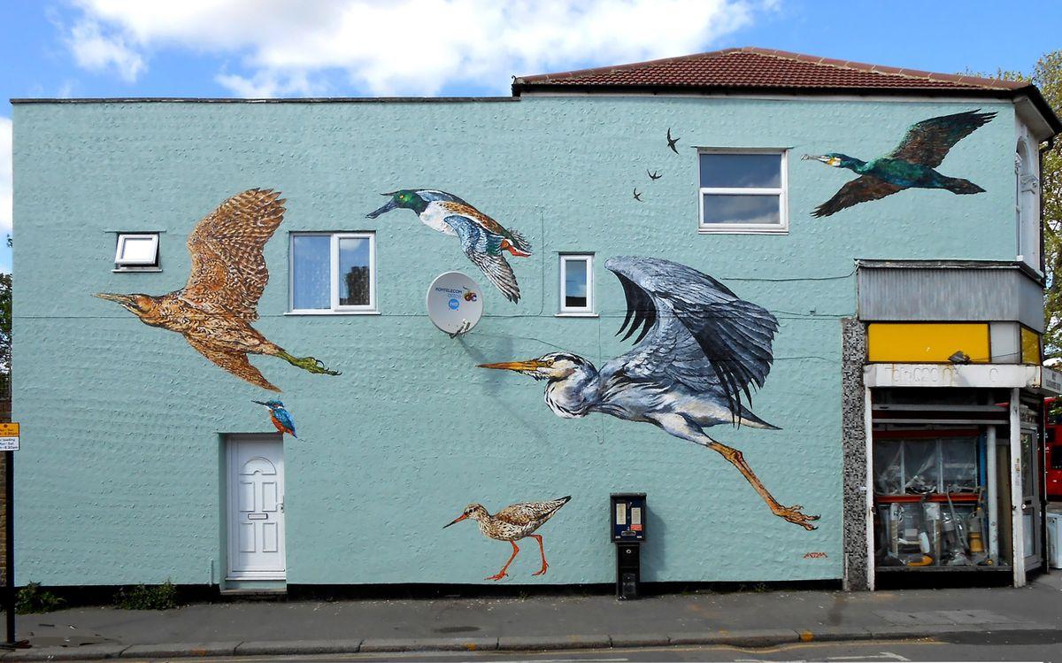 The Best of ATM's Endangered Bird Street Art Murals