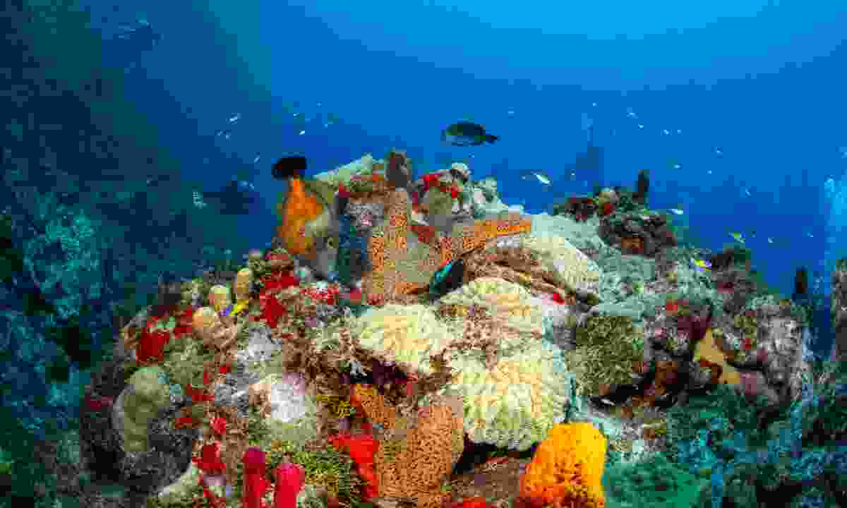 Dive sites are scattered all across the west coast of Dominica