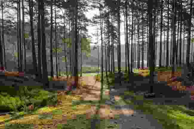 Bourne Wood (Shutterstock)