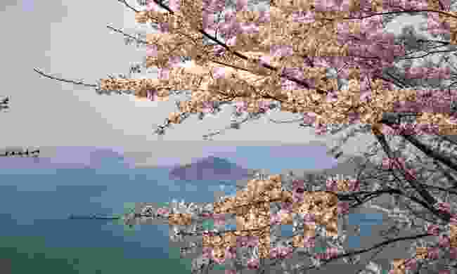 Cherry blossoms on Mt. Shiude, looking over the Seto Inland Sea (Shutterstock)