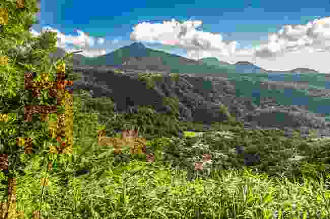 Dominica's lush countryside (Shutterstock)