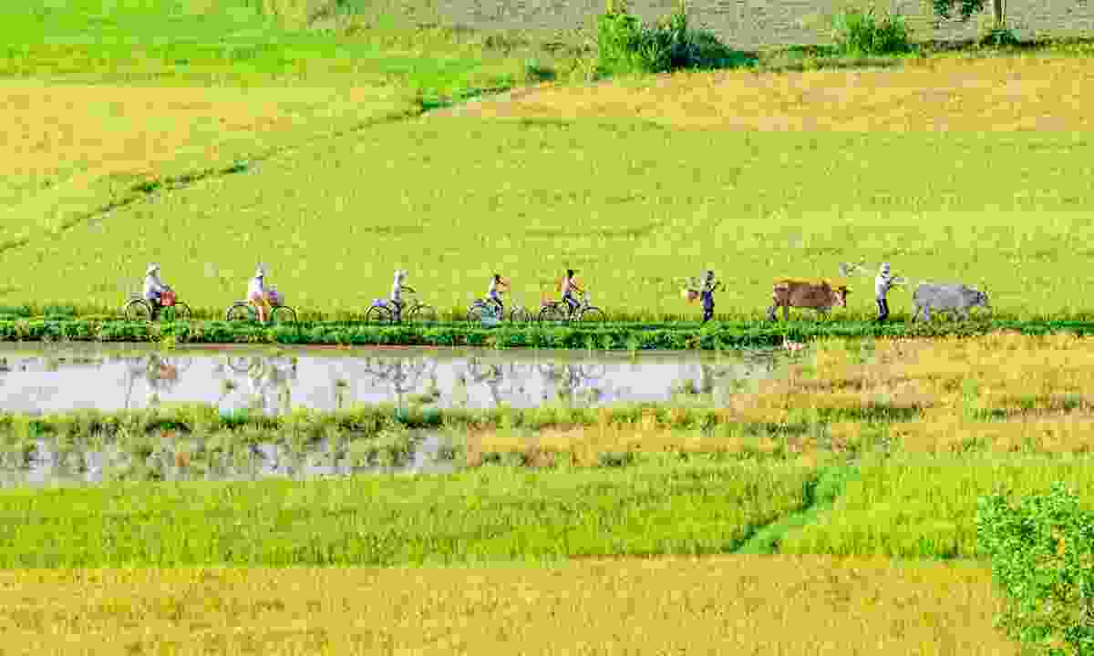 Cycling in the Mekong Delta, Vietnam (Dreamstime)