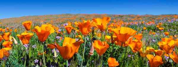 Antelope Valley, California. (Dreamstime)