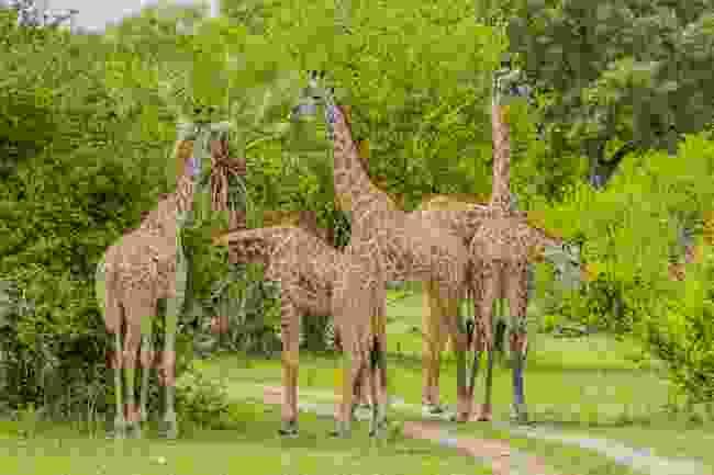 Southern Selous Game Reserve, Tanzania. (Dreamstime)