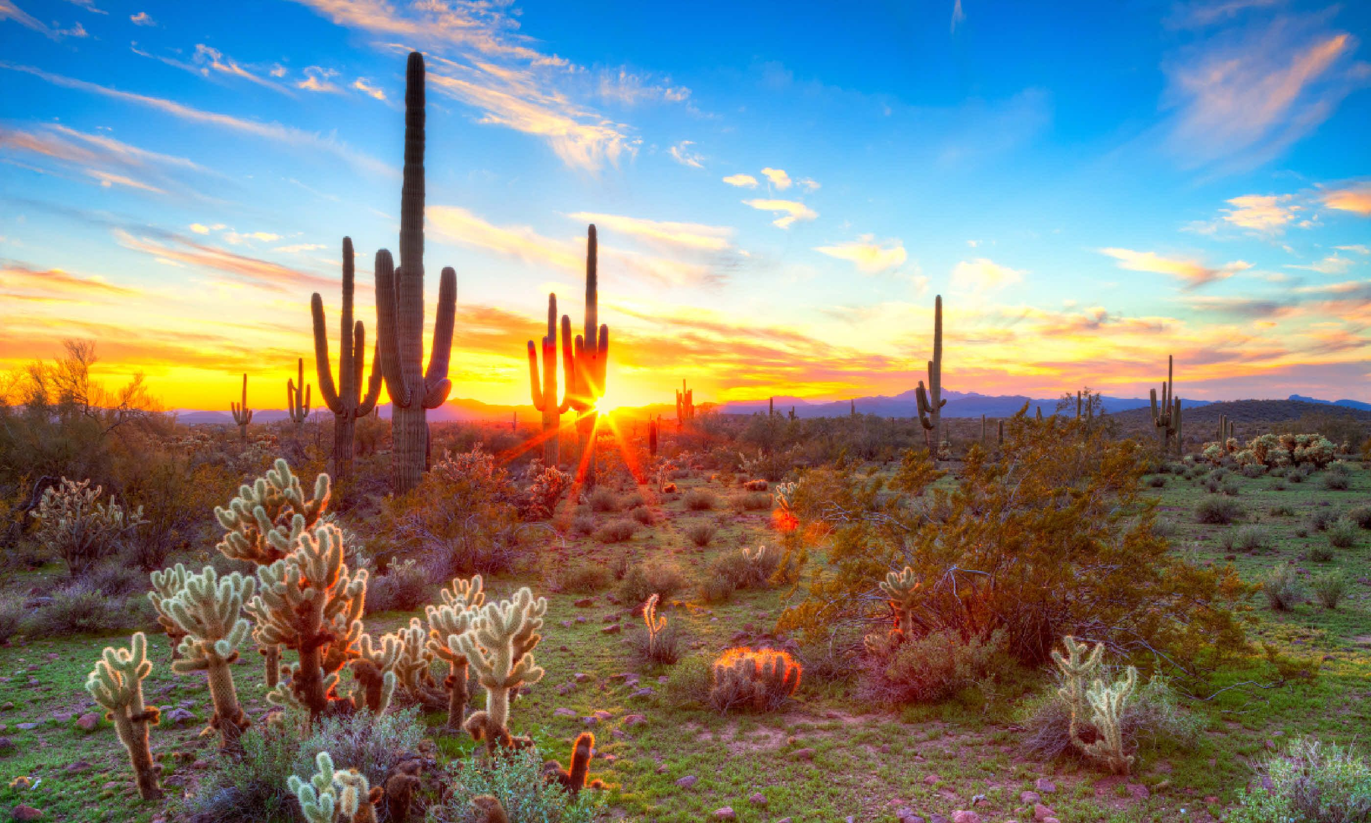 Sunset in Sonoran Desert (Shutterstock)