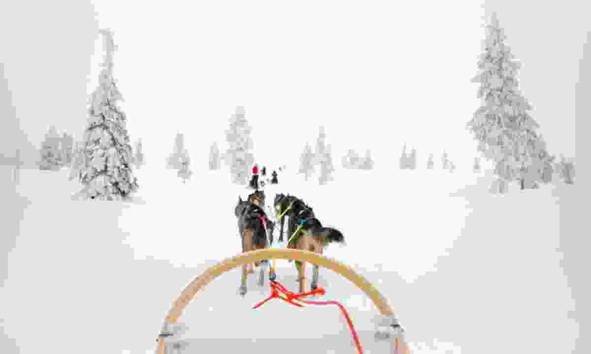 Dog sledding in the Arctic (Dreamstime)