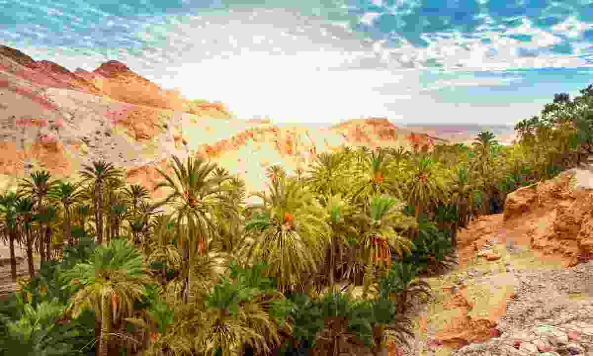 Chebika Oasis (Shutterstock)