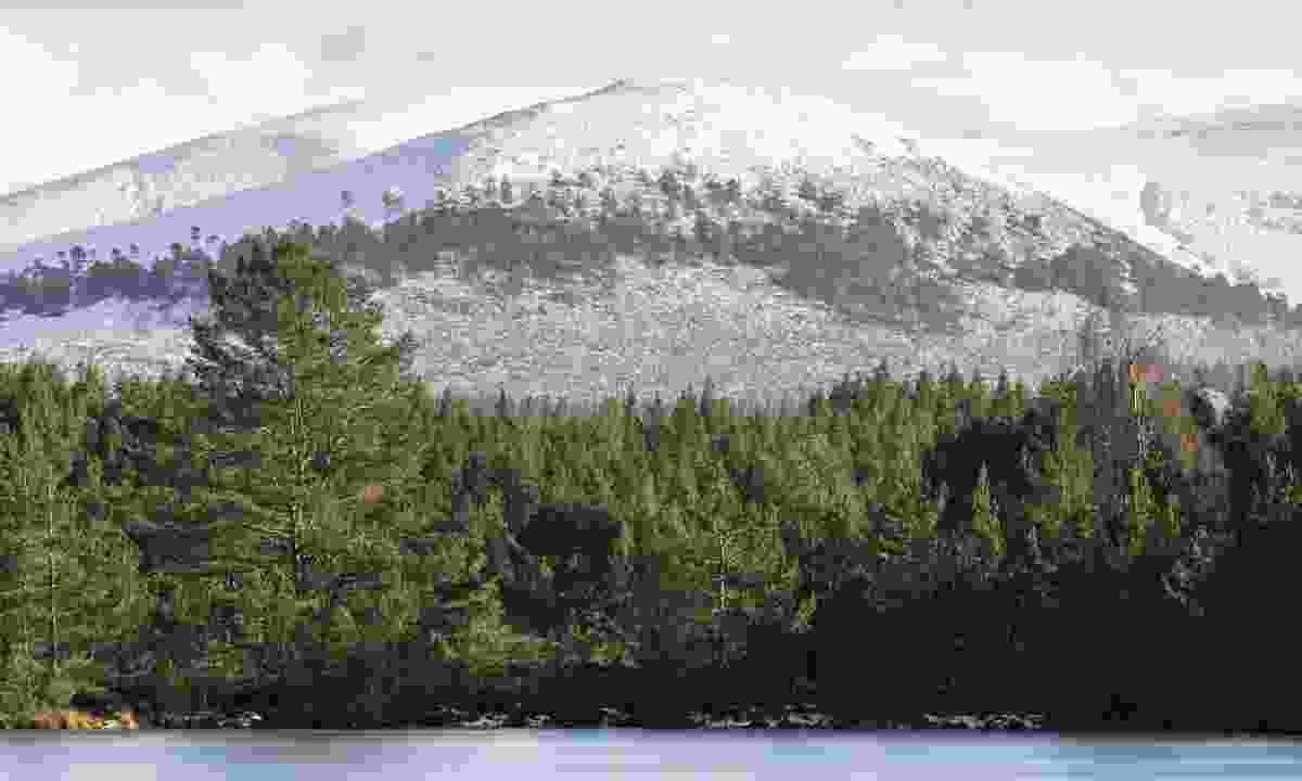 Sgor Gaoithe mountain in the Cairngorms (Dreamstime)