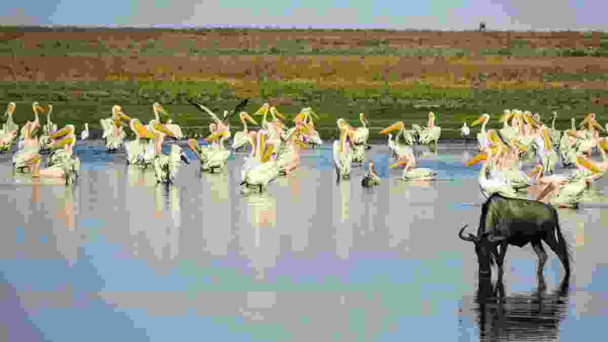Liuwa Plain, Zambia. (Dreamstime)