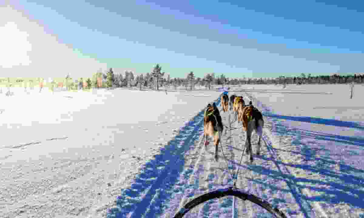 Dogsledding (Dreamstime)