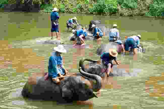 An elephant 'sancturary' in Thailand (Shutterstock)
