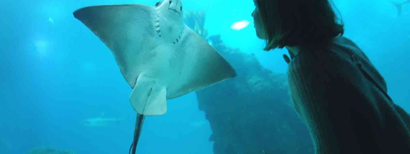 Meeting a ray at the Lisbon Oceanarium (Peter Moore)