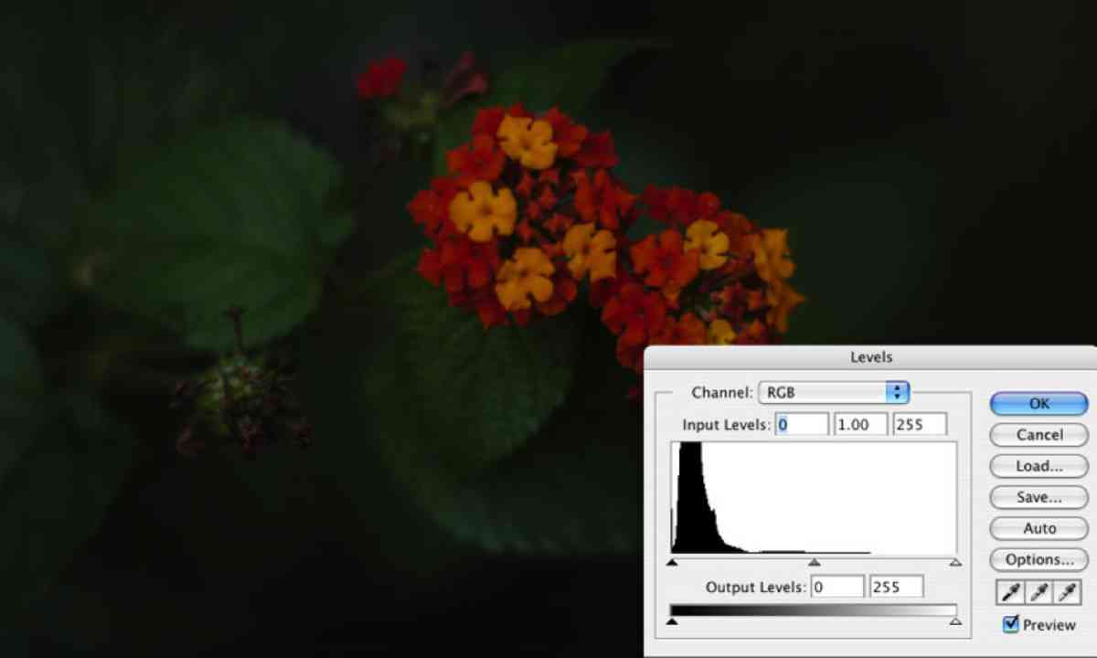 Histogram (Flickr C/C: Jason Parker)