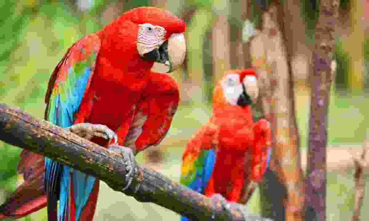 Parrots (Dreamstime)
