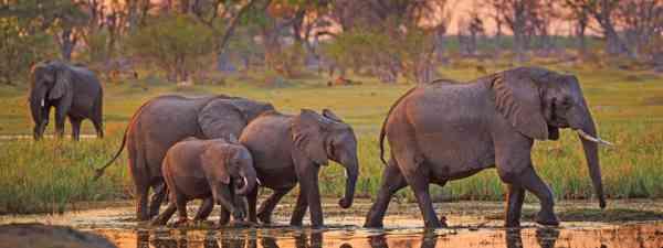 Botswana elephants (Shutterstock)