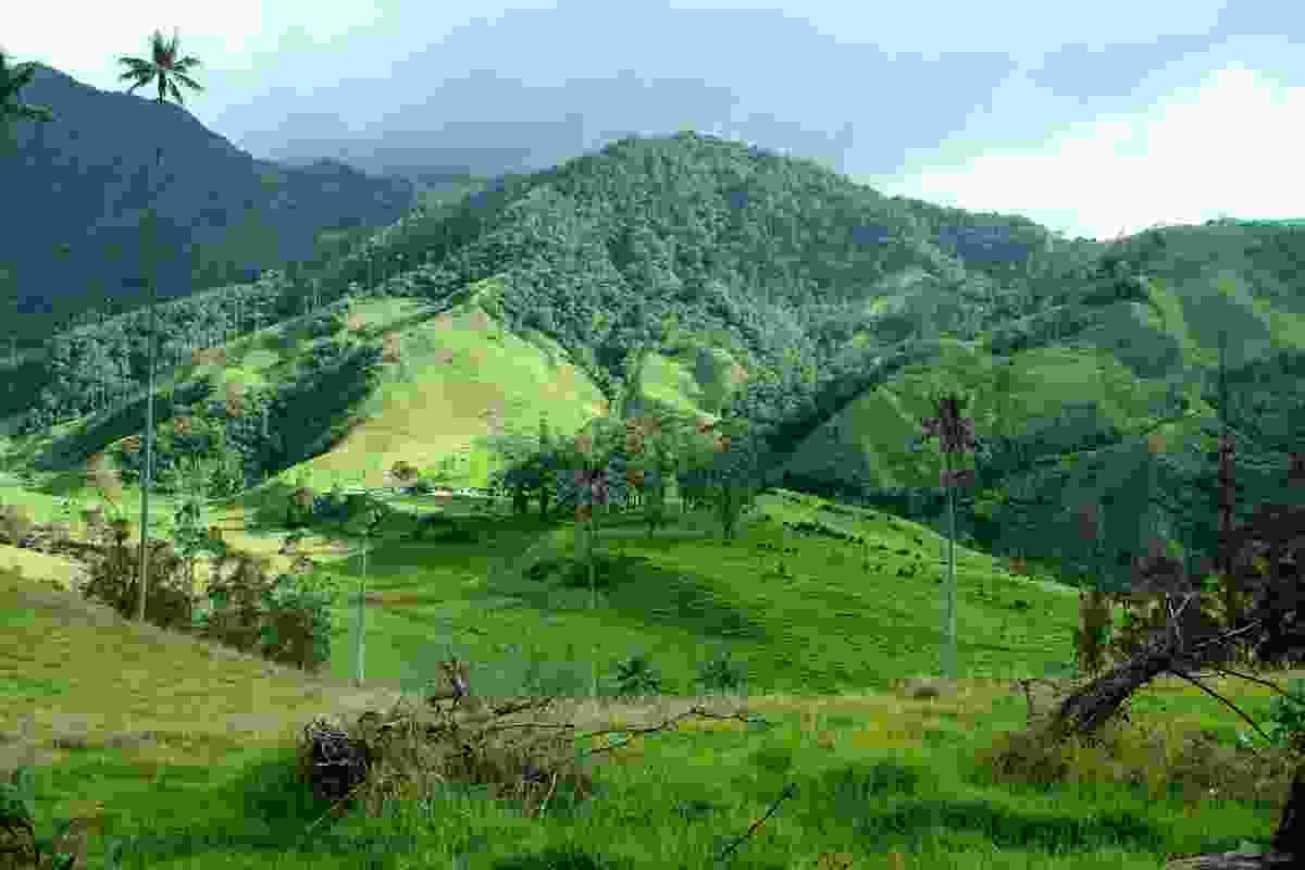 Cocora Valley, Colombia (Dreamstime)