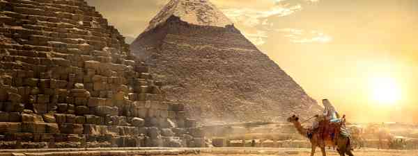 Camel near the pyramids (Shutterstock)