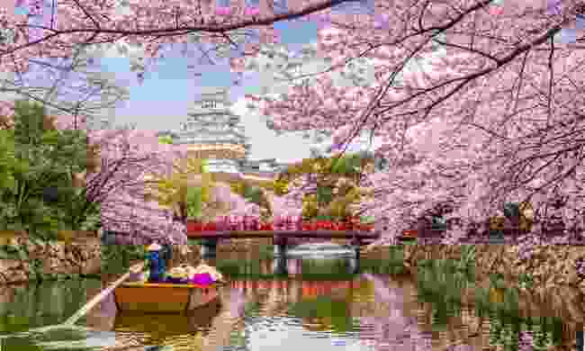 Himeji Castle during the cherry blossom season (Shutterstock)