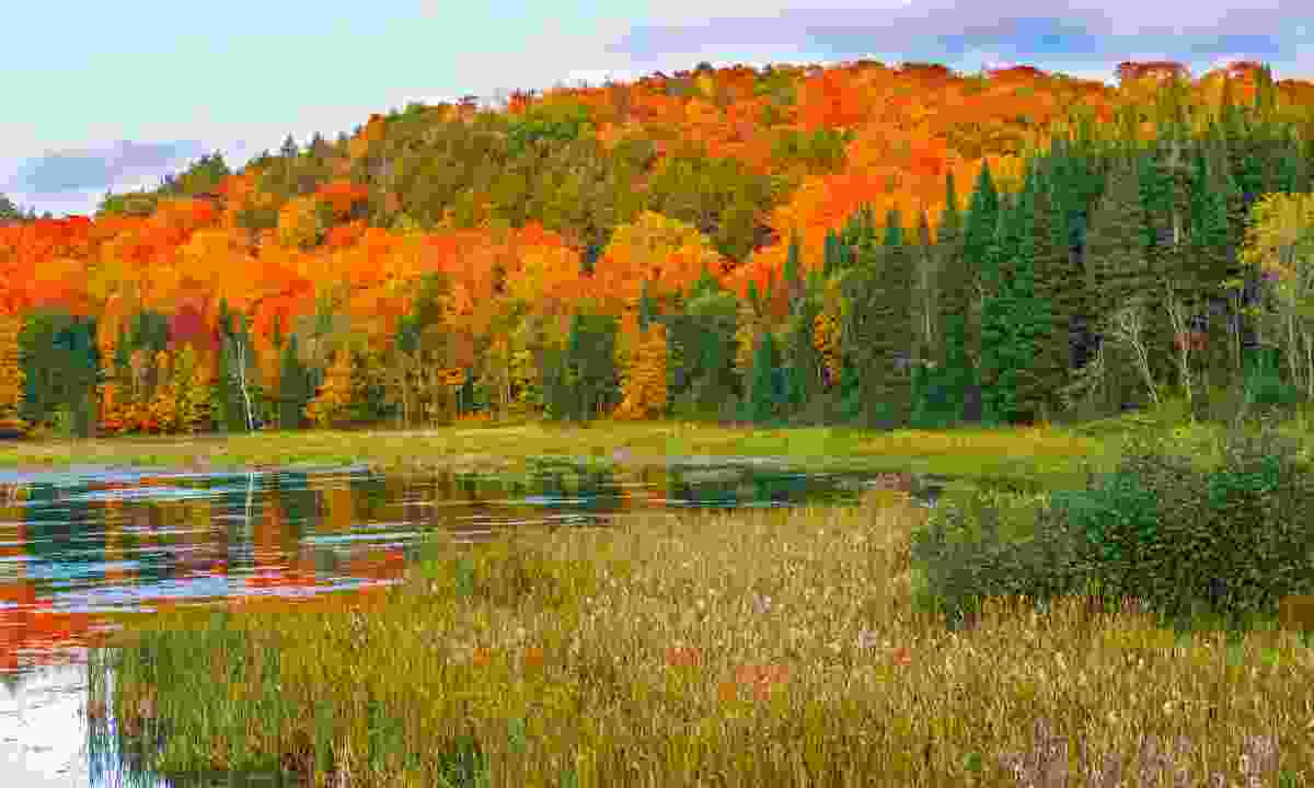 Fall colours, Algonquin Park, Ontario (Dreamstime)