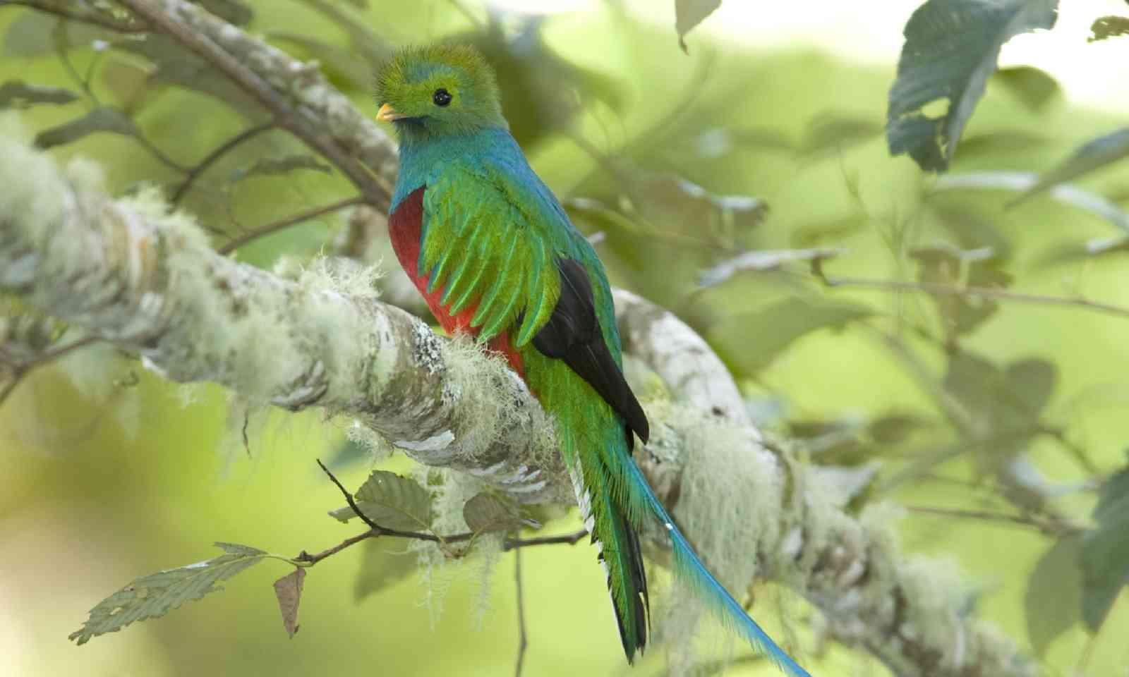 Queztal, Costa Rica (Shutterstock)