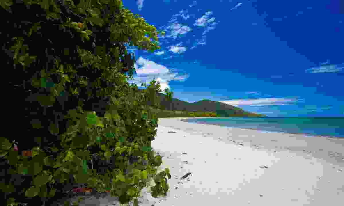 Cape Tribulation beach (Shutterstock.com)