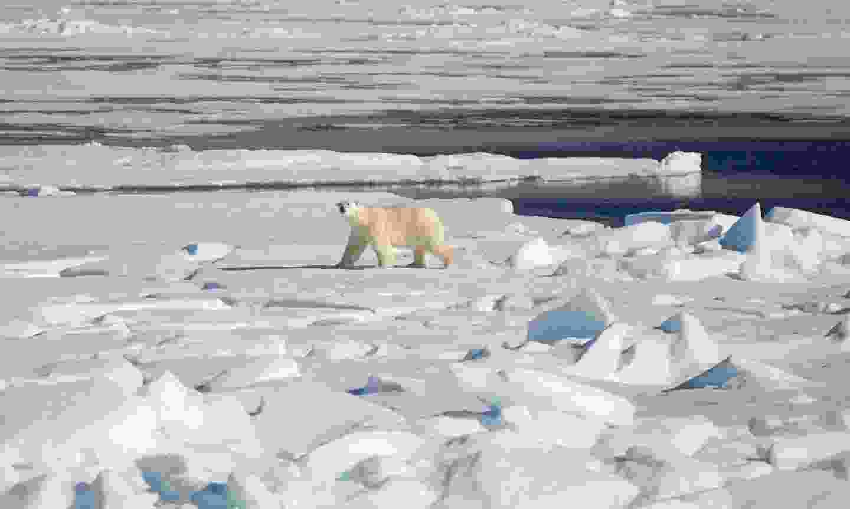 Views of a polar bear from a Quark Expeditions' ship (Acacia Johnson)