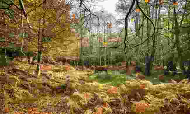 Autumn in the New Forest (Dreamstime)