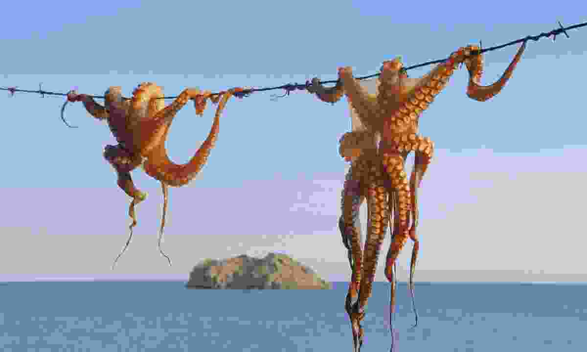 Octopus hanging up to dry in the Dodecanese (Dreamstime)