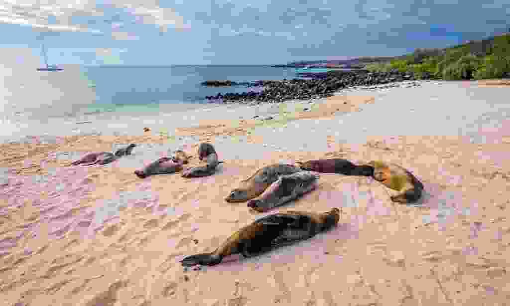 Sea lions on Mann Beach, Galápagos Islands (Dreamstime)