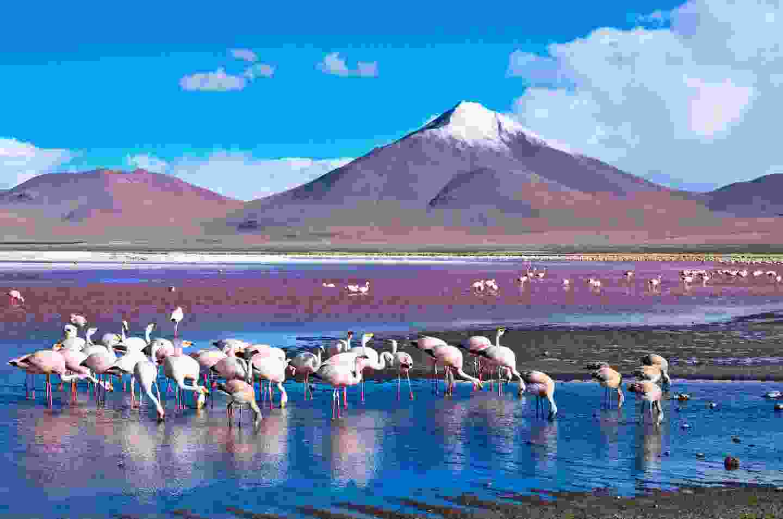 Flamingoes on Laguna Colorada, Bolivia (Shutterstock)