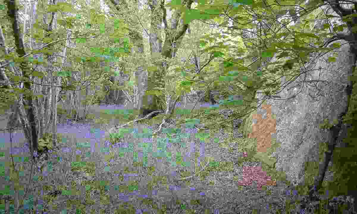 Shaptor Woods, Bovey Tracey, Devon
