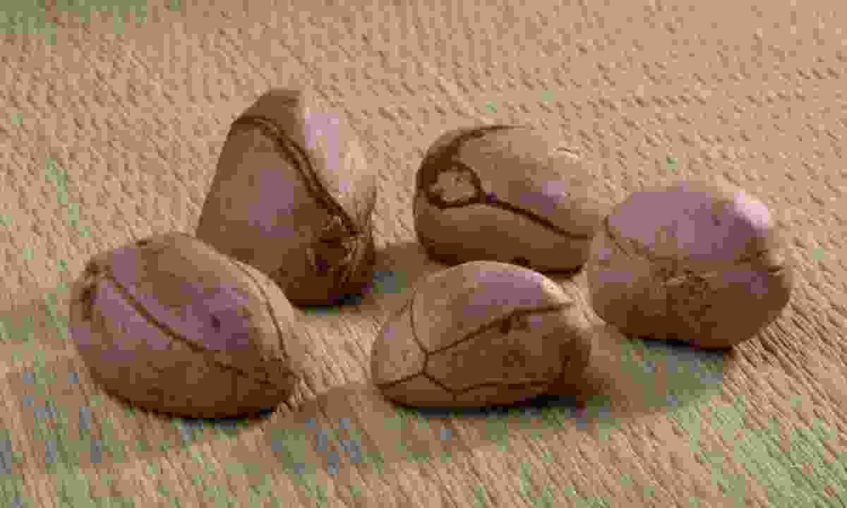 Taste a kola nut in Sierra Leonne (Shutterstock)