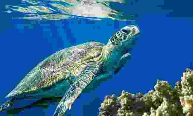Spot loggerhead turtles (Shutterstock)
