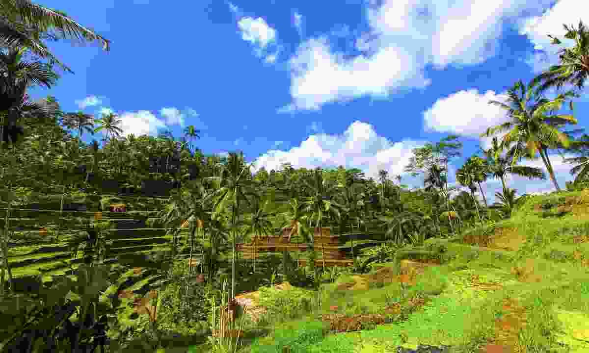 A beautiful rice terrace in Ubud (Shutterstock)