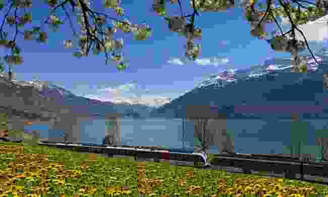 Luzern-Interlaken Express at Lake Brienz (swiss-image.ch)