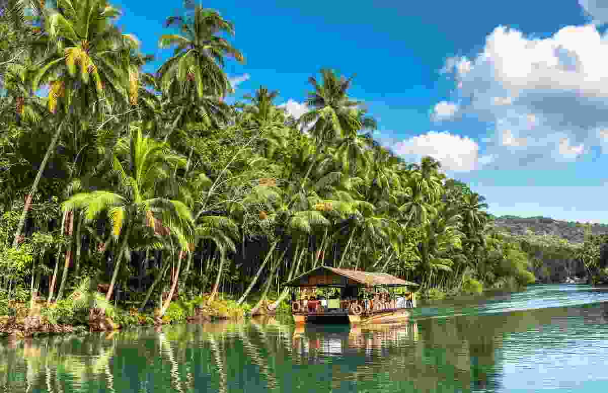 Trees in Bohol, The Philippines (Shutterstock)